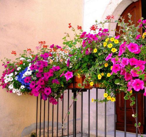 Dekorasyonda Çiçekler