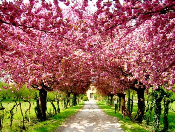 Evinizi İlkbahara Hazırlayın