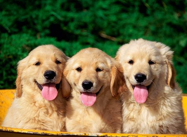 köpek alırken nelere dikkat etmeli